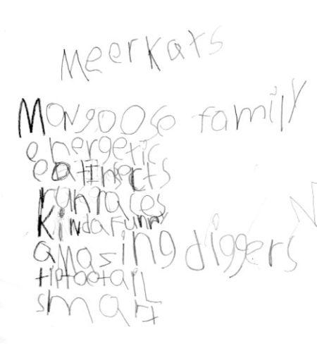 Meercats004